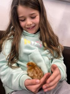 Learning Science with Chickens | chickens hatching in year 2 science at Quntilian School | Student holding a newly hatched chicken